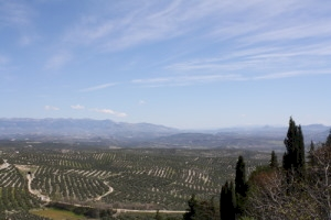 The Olive Grove Landscapes of Andalusia (T) by Jakob Frenzel