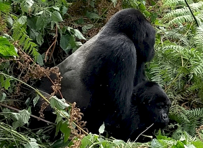 Bwindi Impenetrable National Park by Dennis Nicklaus