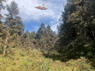 Monarch Butterfly Biosphere Reserve