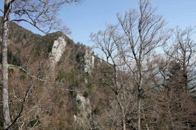 Forêts primaires et anciennes de hêtres des Carpates et d'autres régions d'Europe (Switzerland) (T) by Philipp Peterer