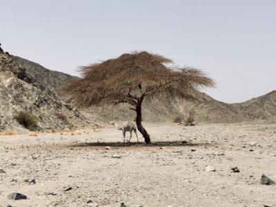 Desert Wadis (T) by Boj