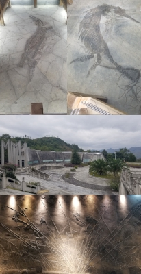 Guizhou Triassic Fossil Sites (T) by Zoë Sheng