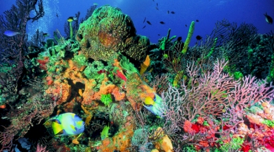 Reef System in the Cuban Caribbean (T) by Zoë Sheng