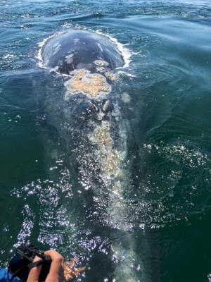 Whale Sanctuary of El Vizcaino