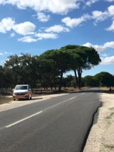 Montado, Cultural Landscape (T)
