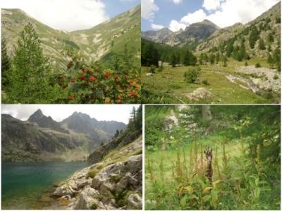 Les Alpes de la Méditerranée (France) (T)