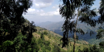 Eastern Arc Mountains Forests of Tanzania (T) by Patrik