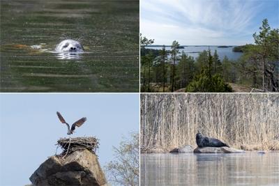 The Ringed Seal Archipelagos of Lake Saimaa (T)